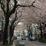 桜満開、でも天気は・・・